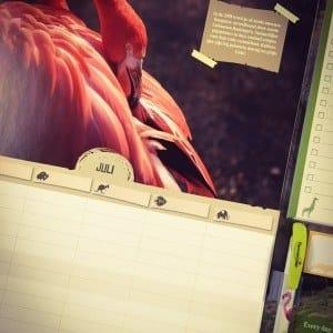 Zoo en Planckendael, zoo & planckendael, Kalenders, kalender, calendar, calendrier, staankalenders, deskkalender, driemaandkalender, 3maandkalender, viermaandkalender, 4maandkalender, stockmans, stockmanskalenders, kalenderlaboratorium, kalenderspecialist, btbkalenders, fotokalenders, kunstkalender, tailormade, tailormadecalendars, kalenderdesign, kalenderontwerp, luxekalender, calendardesign, brunodevos, nickylurquin, zookalender, dierenkalender, dierentuinkalender, zoo, dierentuin, Planckendael, planckendaelkalender, eenhartvoordieren