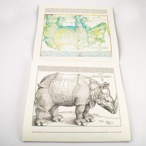 Rhinocerus - Wouter Soudan